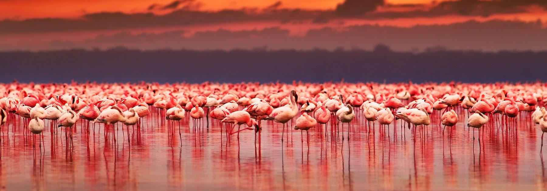Group Vacations to Kenya with Airfare from go-today