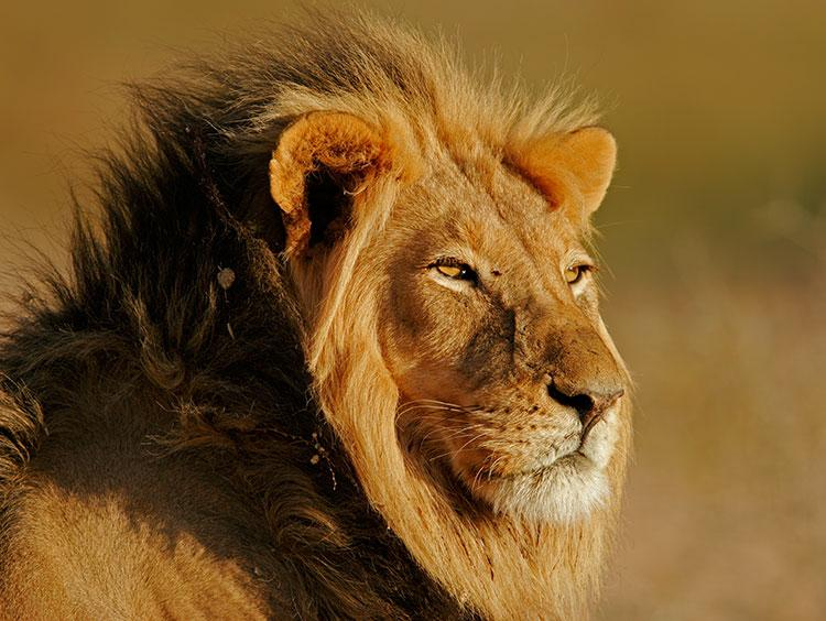 Kruger Park and Kingdoms Escorted Tour