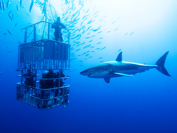 Cape Town Escape with Great White Shark Encounter