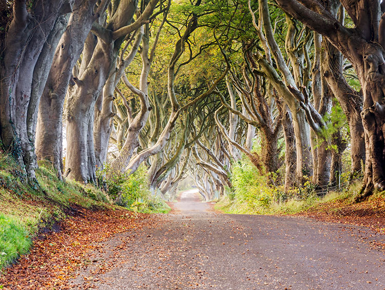 Belfast Escape with Westeros Tour (as featured in Game of Thrones)
